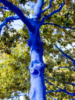 October - Blue Trees at Palo Alto City Hall
