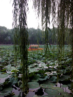 Lotus and Willow, BeiHai