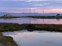 November - Palo Alto Baylands